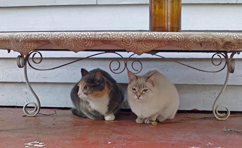 Kissat terassilla